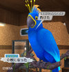 Haruru_929